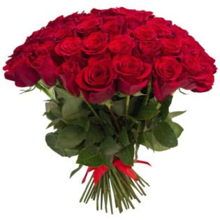 Розы Эквадор 51 шт