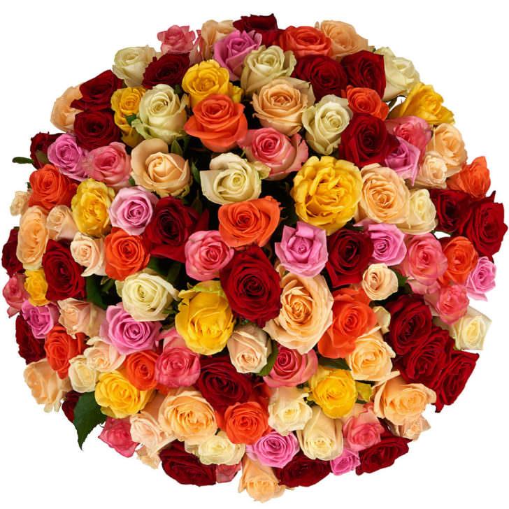 Розы Микс 101